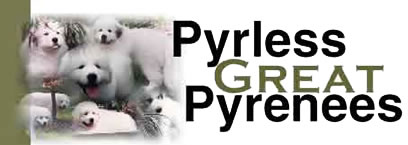 Pyrless Great Pyrenees